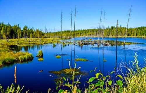 lagos e pântanos