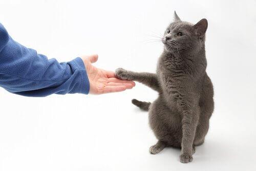 Gato dando a pata para o dono