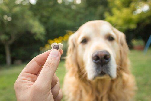 Cachorro recebendo petisco