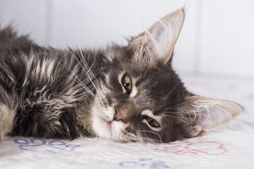 sintomas da epilepsia em gatos