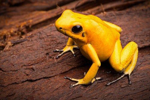 5 espécies mais venenosas do mundo