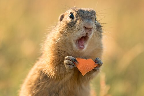 Tem Na Web - Esquilo como animal de estimação: é possível ter um?