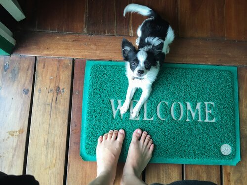 Como evitar que os cães pulem para dizer olá