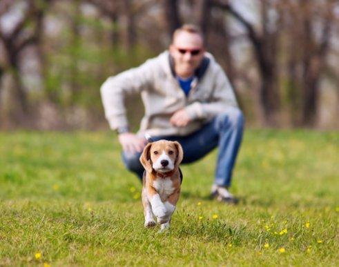 Como evitar que seu animal se perca num passeio