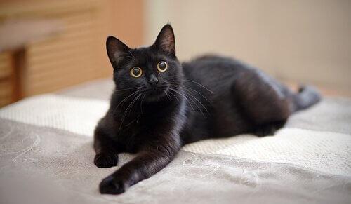 Recomendações para deixar os gatos sozinhos em casa