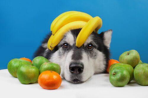 Frutas refrescantes para o seu cachorro