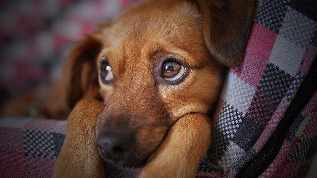 Cachorro com olhar meigo