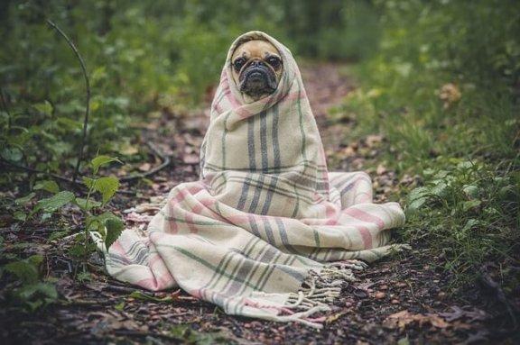 Maneiras de prevenir a gripe canina