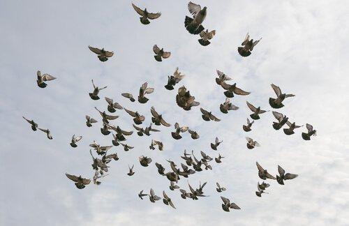 Bando de pássaros