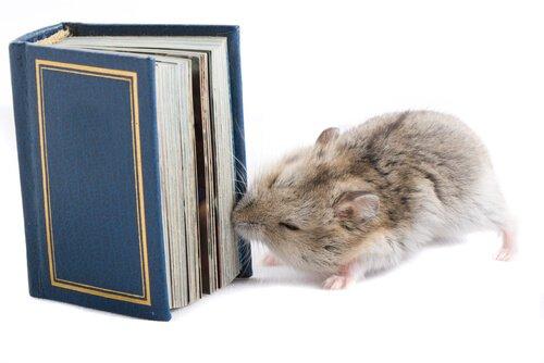 Hamster mordendo livre