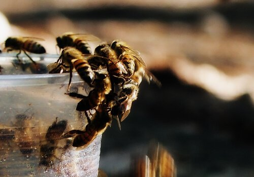 abelhas em um copo descartável