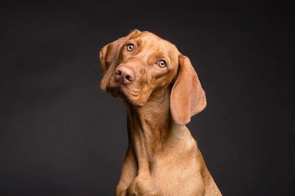 Influência da alimentação na saúde da pele canina