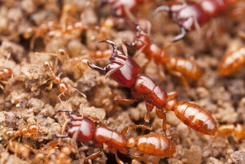 Os insetos assassinos mais letais do mundo