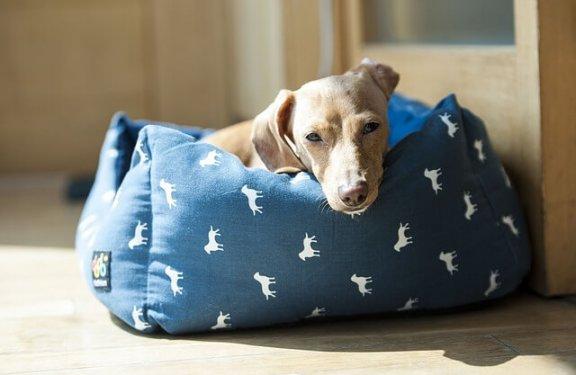 6 lugares adequados para a caminha do cachorro