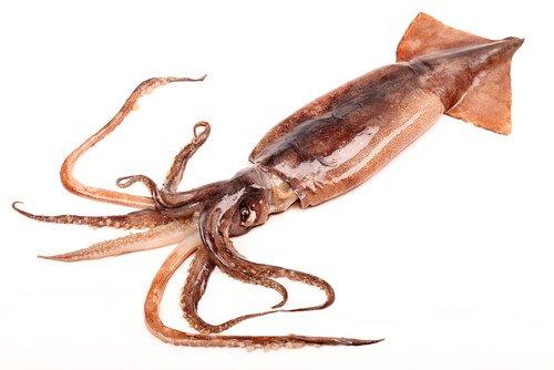 Cefalópode