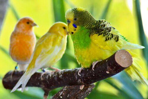 As melhores aves para se ter em casa