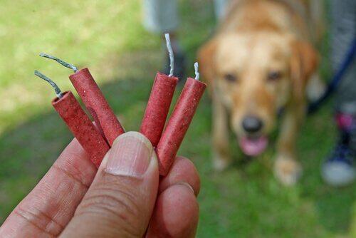 cães com medo de fogos de artifício