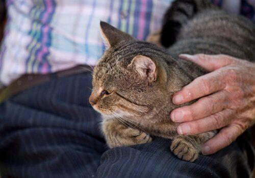 Gato no colo de um idoso