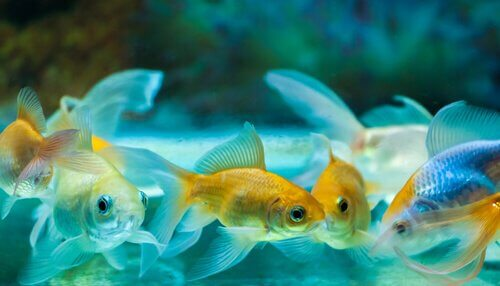 Cuidados básicos com um peixe