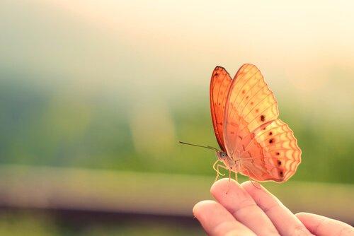 atrair borboletas para seu jardim