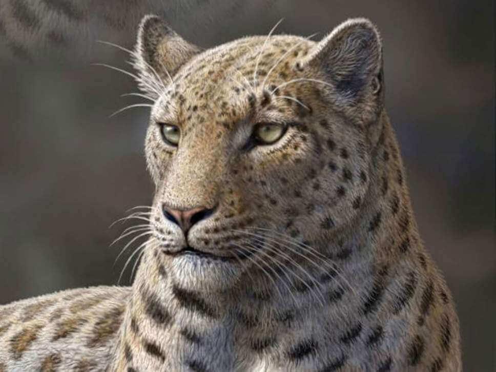 5 felinos extintos