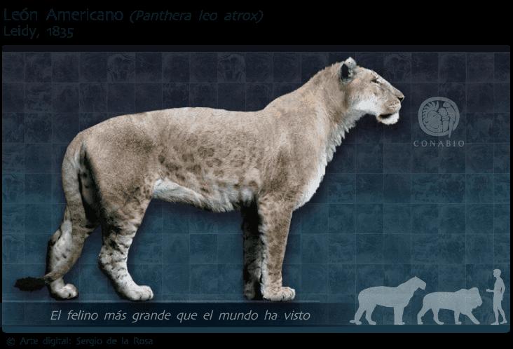 felinos extintos: leão americano