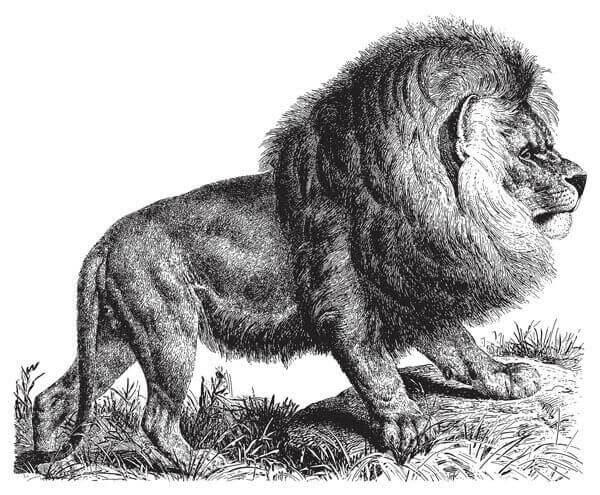 grandes felinos extintos