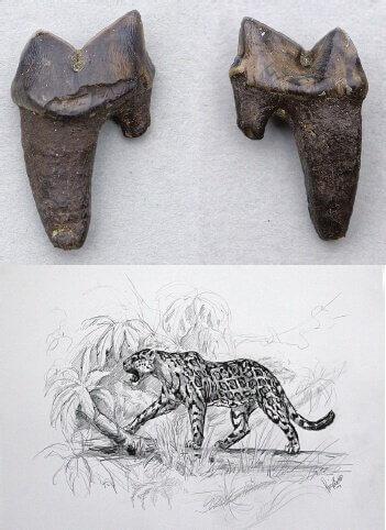 fósseis de felinos extintos