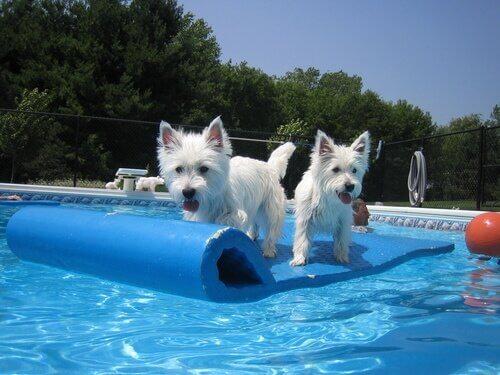 Cães em parque aquático