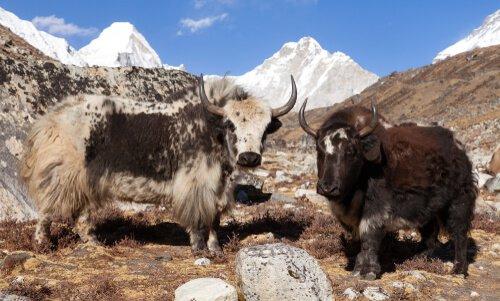 Grande Parque Nacional do Himalaia