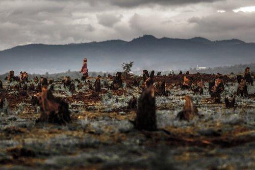 desmatamento pelo óleo de palma