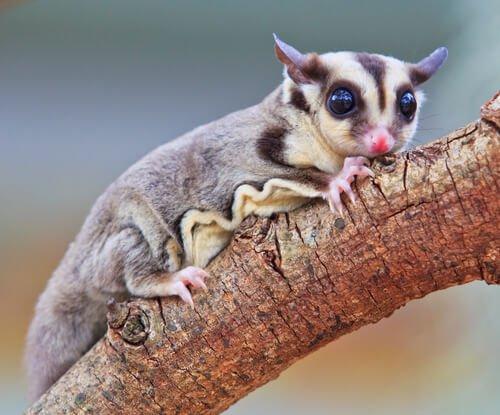 Fauna da Nova Guiné, segunda maior ilha do mundo