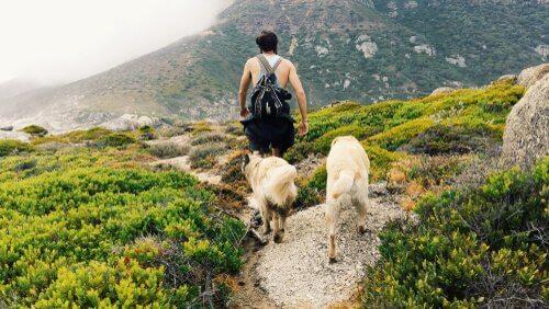 por que os cães nos seguem para todos os lugares