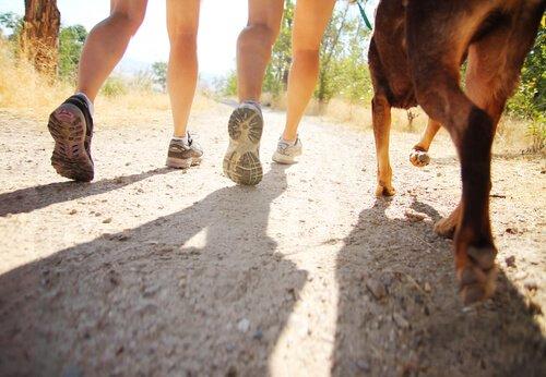 Caminhada com cães