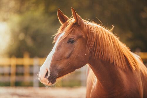 Por que seu cavalo está triste?