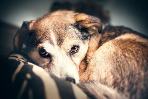 Reforços positivos e reforços negativos ao punir seu animal de estimação