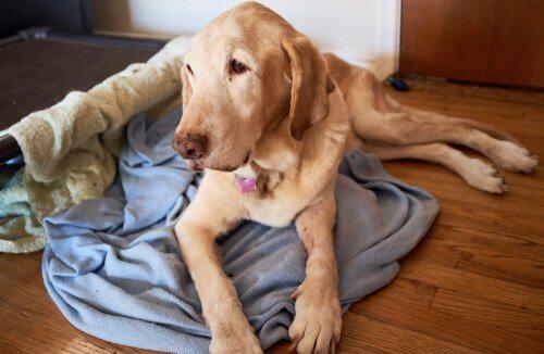 Por que surgem problemas de comportamento em cães mais velhos?