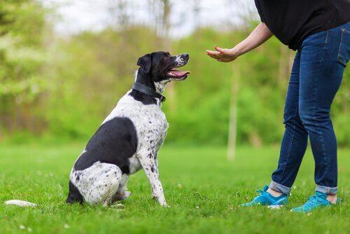 Psicologia aplicada ao treinamento de cães