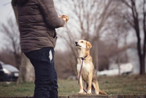 Psicologia canina: tudo que você precisa saber