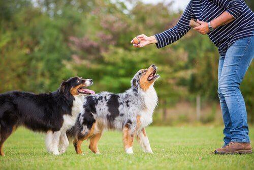 Cachorros sendo adestrados