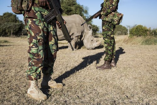 rinoceronte e a guerra