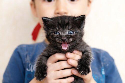 ronronar dos filhotes de gato