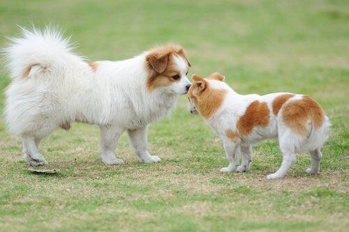 Saudação dos cães: tudo o que você precisa saber