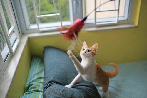 Gato brincando com pluma