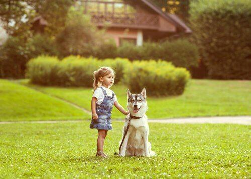 Tem Na Web - Senso de orientação dos cães: saiba como eles voltam para casa
