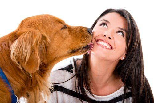 8 sinais de que seu animal de estimação te ama