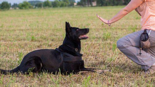 educar um cão