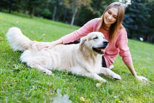 Sinais de calma para educar um cão
