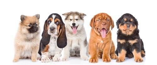 #cachorros