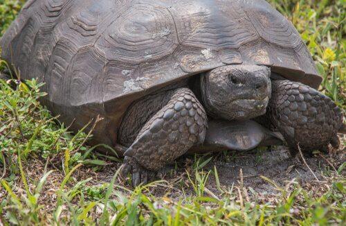 5 animais exóticos invasores na Espanha